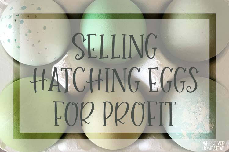 One dozen mix hatching eggs NPIP CERTIFIED